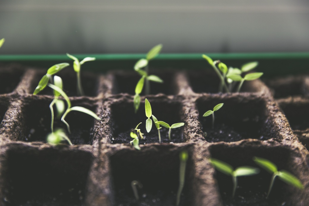 plant-1474807.jpg